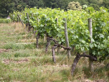 Bretonische Weine & der Klimawandel