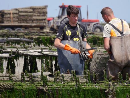 Geschmack nach Meer? – Bretonische Austern aus Hochsicherheits-Laboren