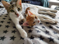 Ginger & Grey