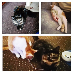 Kitty & Ollie