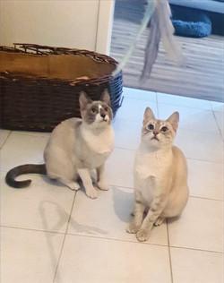 Tiron & Ramsay