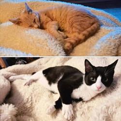 Finn & Oreo