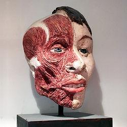 ANATOMY OF THE HEAD.jpg