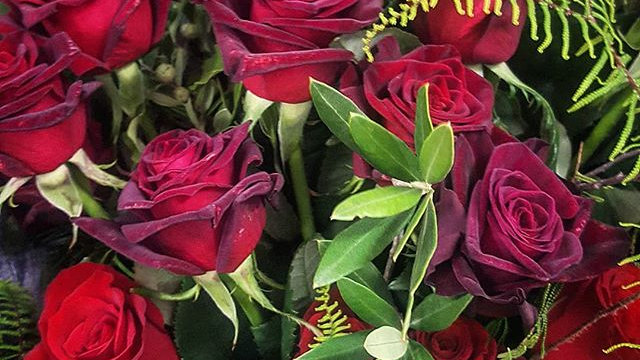 Dozen Short Stemmed Red Roses