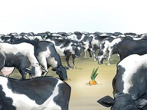 Mindre kjøtt! En rød tråd for en ny landbrukspolitikk