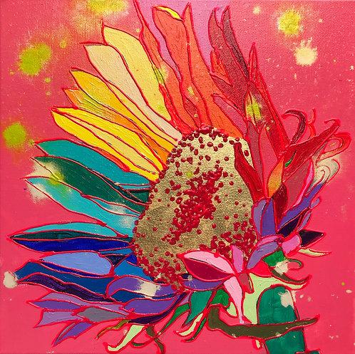 12X12 Sunflower, Fuscia
