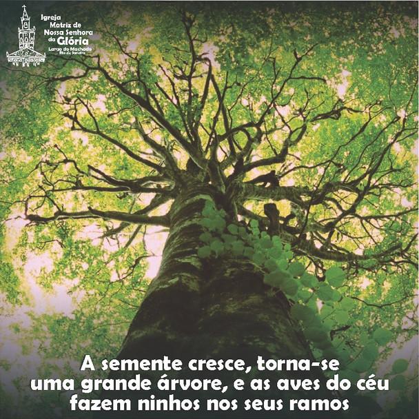"""""""A semente cresce, torna-se uma grande árvore, e as aves do céu fazem ninhos nos seus ramos."""" Lc 13,"""