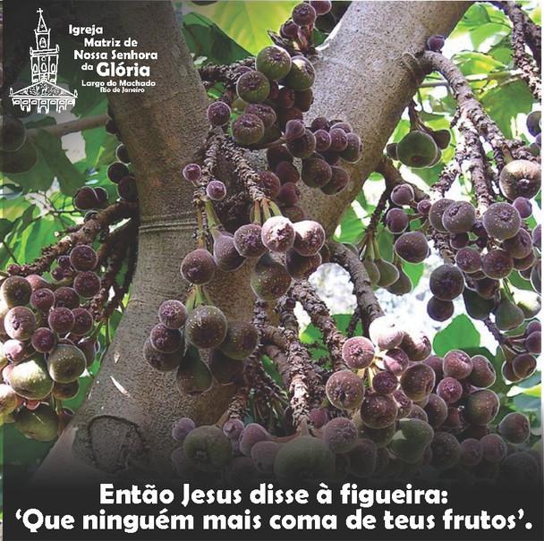 Então Jesus disse à figueira: 'Que ninguém mais coma de teus frutos.' Mc 11,14