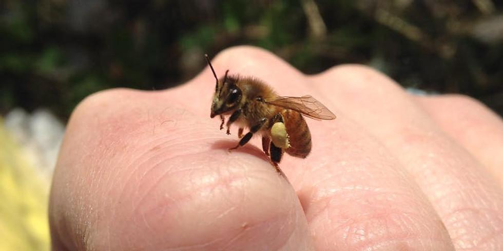 """Bees & Beekeeping!"" by Bike a Bee at Ampersand Cowork"