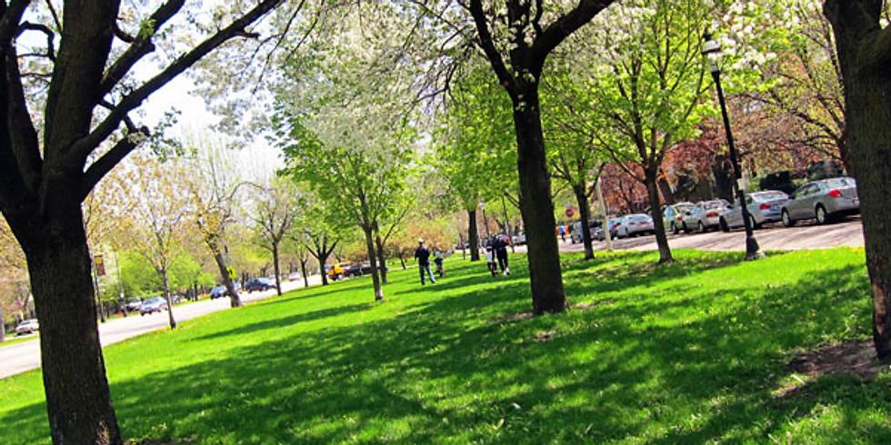 Help Plant Trees on Logan Boulevard