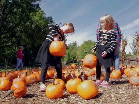 Pumpkin Season KC Style!