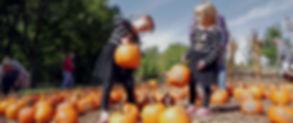 pumpkin hollow.jpg