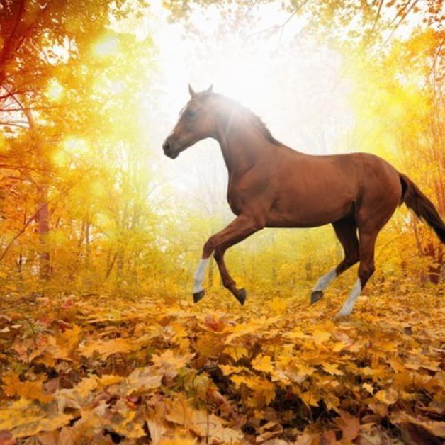 Herbstzeit - Pferdezeit