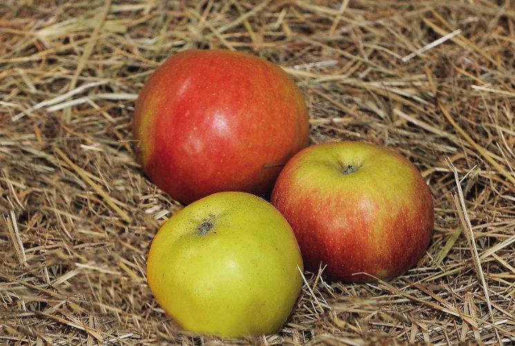 Apfel-Web.jpg