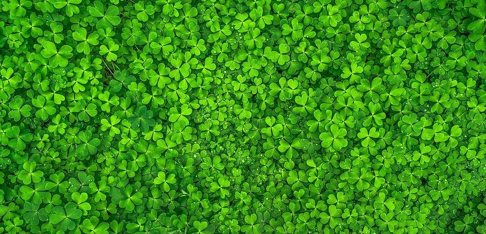leaf-1482948_1280.jpg