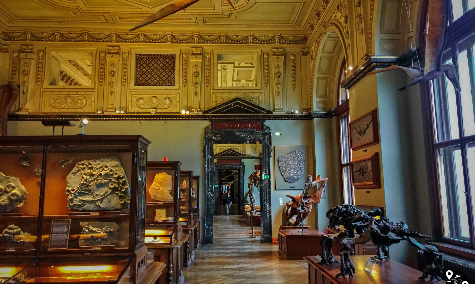 Зал палеонтологии в Музее естествознания, Вена