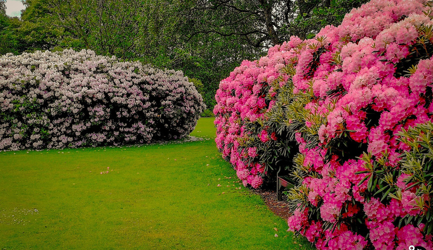 Английский сад, Гаага