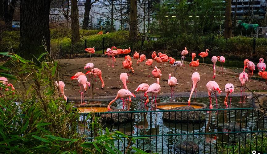 Берлинский зоопарк, Берлин