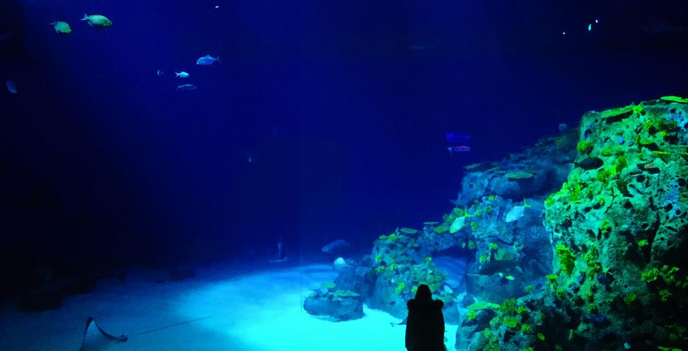 Национальный аквариум Дании, Копенгаген