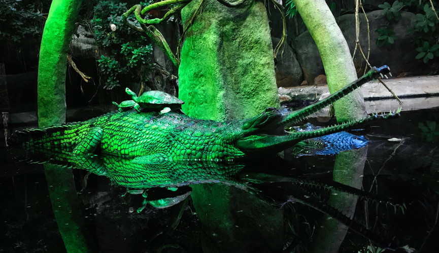 Зоопарк, Прага