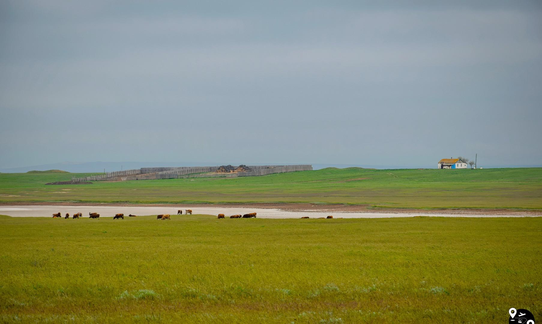 Скотоводческие хозяйства калмыков, около озера Маныч-Гудило