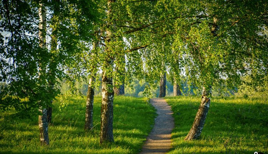 Лесные пейзажи Латвии