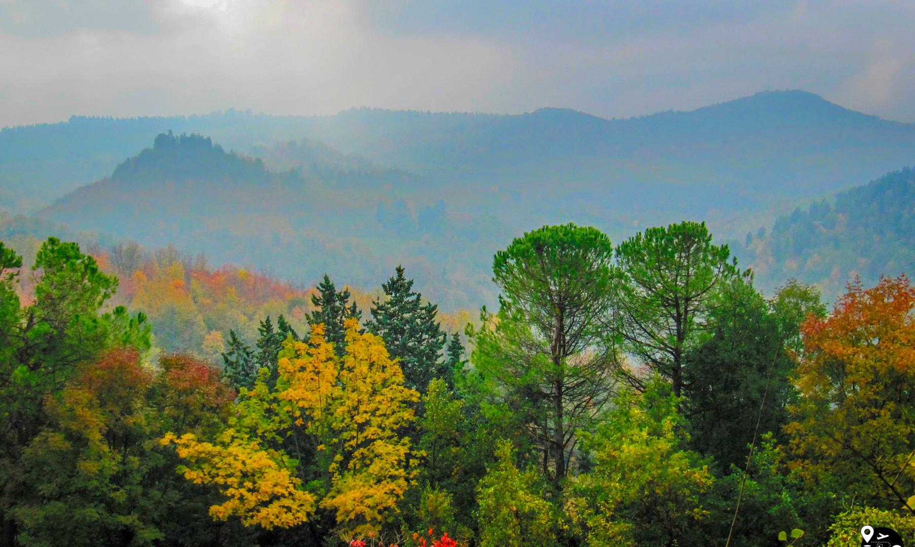 Лесные пейзажи Тосканы