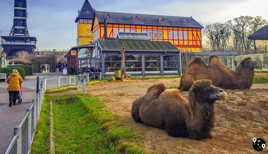 Зоопарк, Копенгаген