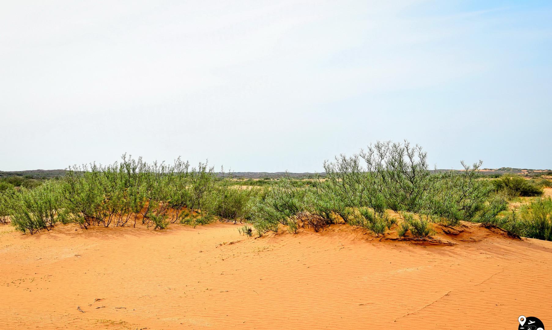 Пустыни в Калмыкии