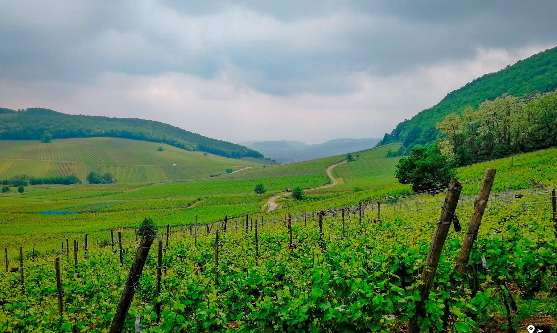 Пейзажи земли Эльзаса