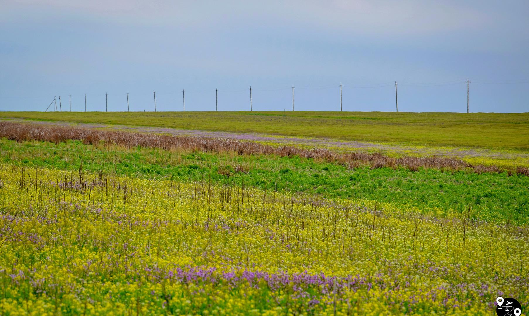 Цветущая степь в Калмыкии