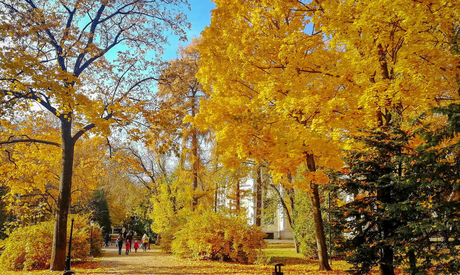 Центральный парк, Калуга