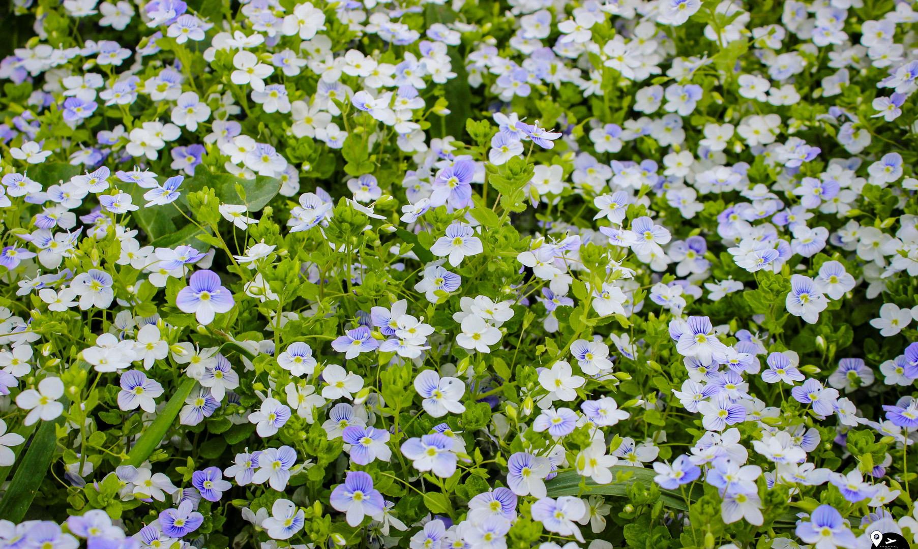 Цветы в национальном парке Кемери