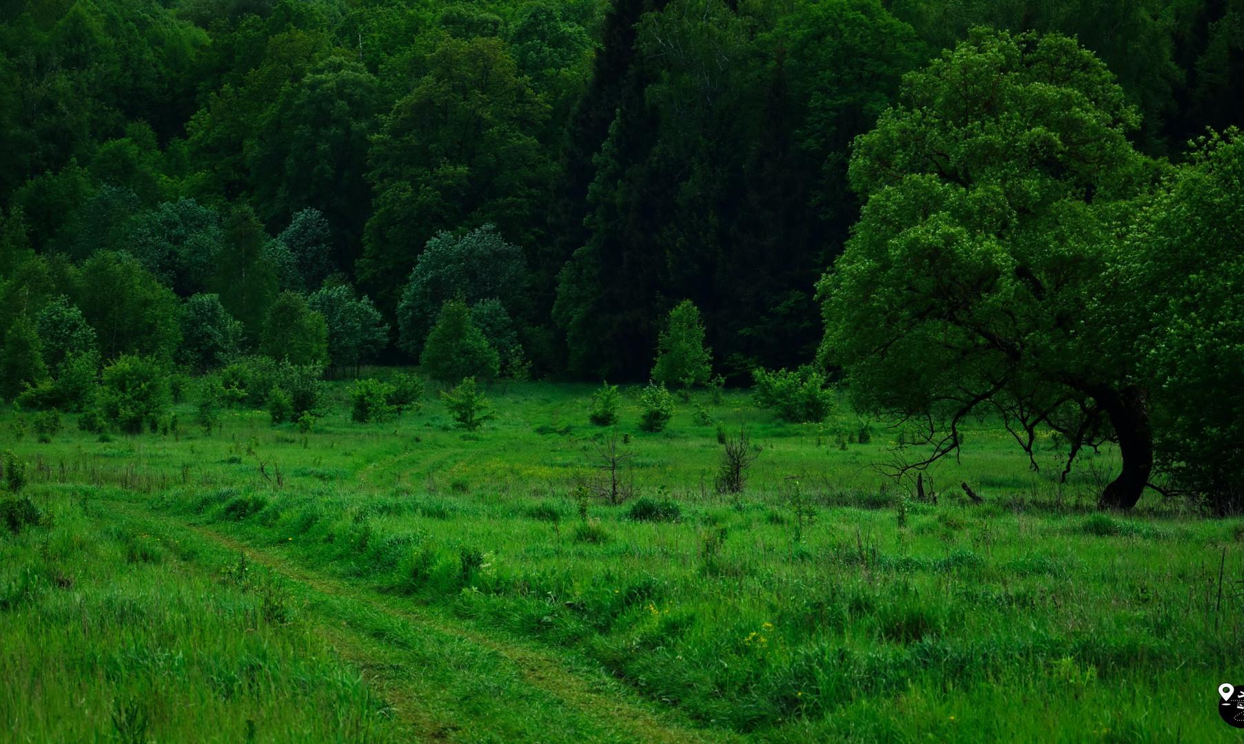 Леса Калужской области