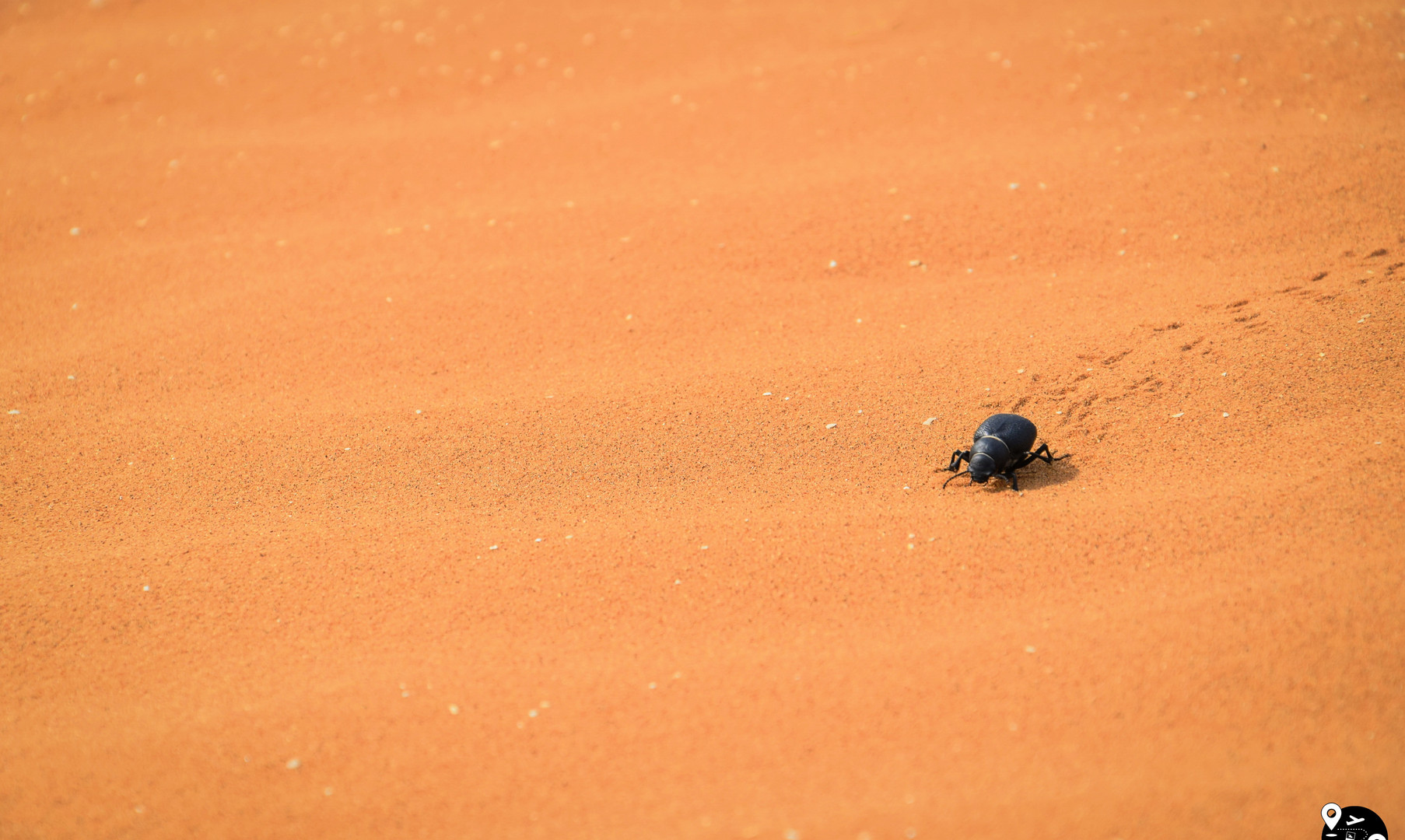 Дикая природа пустынь в Калмыкии