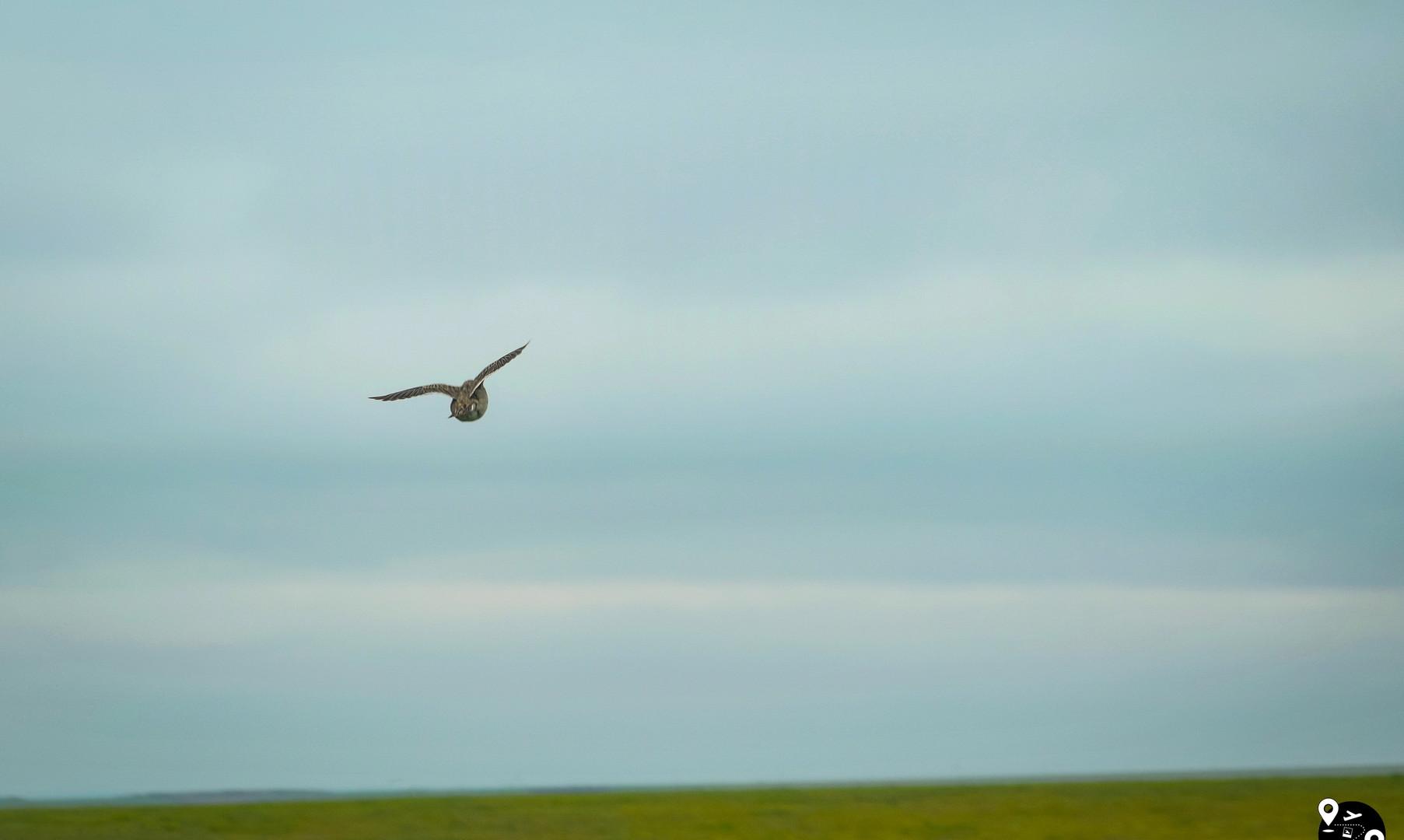 Дикая природа в степях Калмыкии