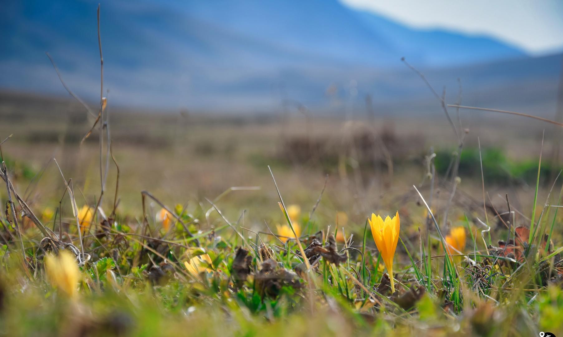 Виды плато Лагонаки