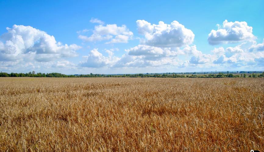 Равнинные пейзажи Латвии