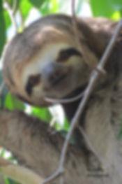 amazonia_2013 1790 - Copie.jpg