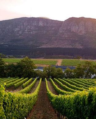 www.drinkpreneur.com-cape-winelands-10.j