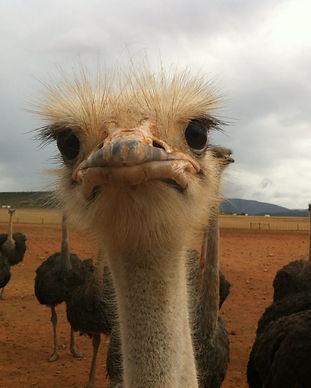 ostrich-farm-trip.jpg