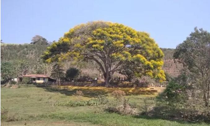 Caminho da Fé - Parque da Cachoeira do Guiné