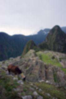 Journeys to Peru