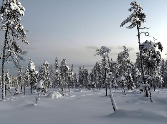 Polar night light