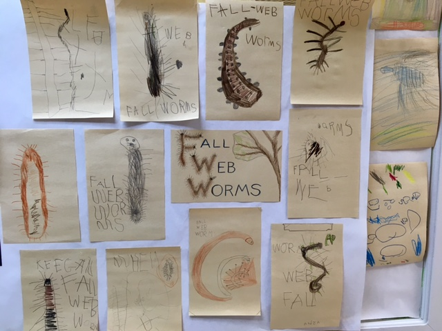 Fall Web Worm Drawings