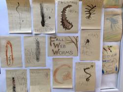 Fall Web Worm Drawings