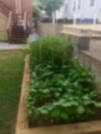 School Garden.jpg