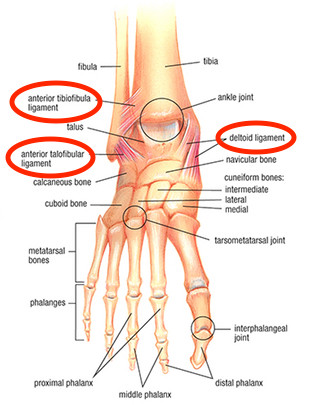 Common ligament sprains | soccer