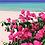 Thumbnail: Beach Roses 01