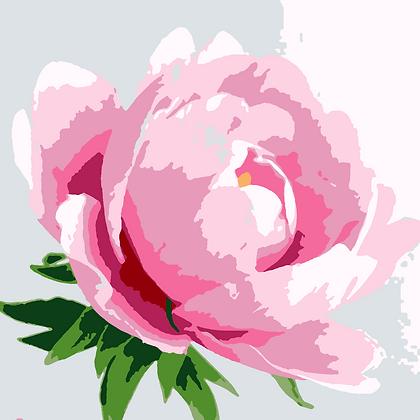 Pink Peony-Simplified
